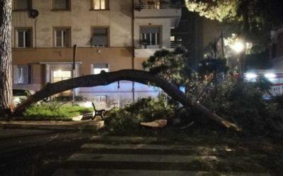 """Crollo albero a Corso Trieste, U.Di.Con.: """"La mancata manutenzione mette in pericolo la vita dei cittadini"""""""