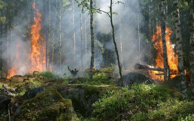 Emergenza incendi nel Lazio: qualche consiglio per evitarli
